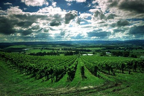 King Valley Wineries